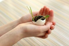 Hands holding a sprout in the soil in the shell. A growing sprout is the beginning of a new life. Seed germination.  stock image