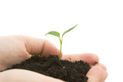 Hands holding sprouting plant Royalty Free Stock Image