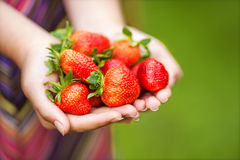 Hands holding strawberries Royalty Free Stock Photography