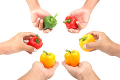 Hands holding sweet peppers on white background Stock Image