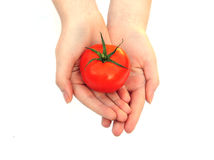 Hands holding a tomato Royalty Free Stock Photo