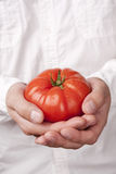Hands holding tomato Stock Photos