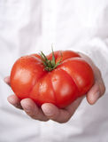 Hands holding tomato Royalty Free Stock Photos