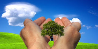 Hands holding a tree Stock Photos