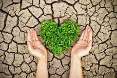 Hands holding a tree arranged as a heart shape on cracked earth Royalty Free Stock Images