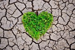 Hands holding a tree arranged as a heart shape on cracked earth Stock Photo