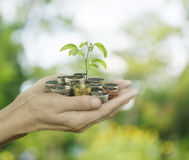 Hands holding a tree growing on coins over green bokeh backgroun Royalty Free Stock Image
