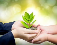 Hands holding tree growing on coins Royalty Free Stock Photography