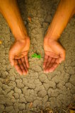 Hands holding tree growing on cracked earth Royalty Free Stock Photo