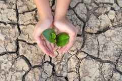 Hands holding a tree growing on cracked ground, Save the world, Environmental problems, Protect nature stock photos