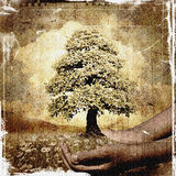 Hands holding a tree grunge background Royalty Free Stock Images