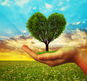 Hands holding a tree in the shape of heart Royalty Free Stock Photo