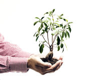 Hands Holding Tree. Two cupped hands holding a small tree planted in brown substratum Stock Image