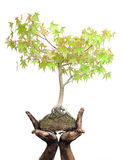 Hands holding tree on white Stock Photography