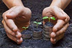 Hands holding tress growing on coins Stock Photos