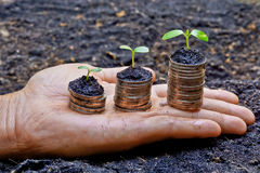 Hands holding tress growing on coins. / csr / sustainable development / economic growth stock image