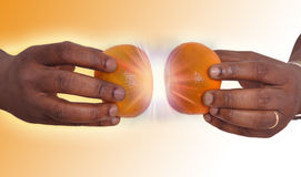 Hands holding two mandarins Stock Images