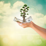 Hands holding US Dollars note with bonsai tree Stock Photography