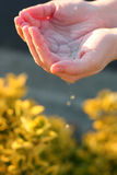 Hands holding water. Young woman's hands holding water over her garden plants with water drops trickling down stock image