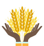 Hands holding wheat ears. Agribusiness, agrobusiness vector illustration