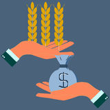 Hands holding wheat ears and money Royalty Free Stock Images