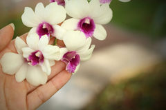 Hands are holding of white orchids. Hands are holding a bunch of white orchids Royalty Free Stock Image