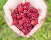 Hands holding wild raspberry Stock Photos
