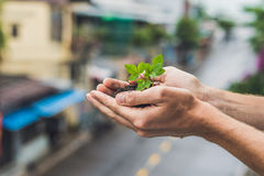Hands holding young green plant, Against the background of the city. The concept of ecology, environmental protection.  Royalty Free Stock Image