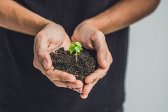 Hands holding young green plant, on black background. The concept of ecology, environmental protection Stock Image