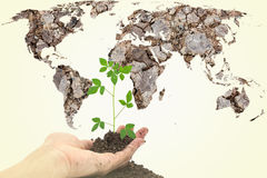hands holding young green plant with Global map dried soil textu Stock Photography