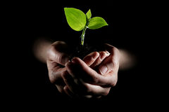 Hands holding young plant. In darkness royalty free stock image