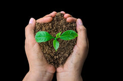 Hands holding young plant black background Stock Photos