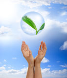 Hands holding young plant in a bubble Stock Photos