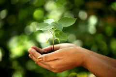 Hands holding young plant Royalty Free Stock Image