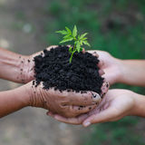 Hands holding young plant Stock Images
