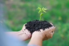 Hands holding young plant. Hands holding a green young plant Royalty Free Stock Images