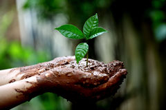 Hands holding a young plant Stock Images