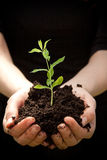 Hands holding young plant Stock Image