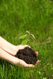 Hands holding young plant Royalty Free Stock Photo