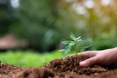 Young plant growing on soil with green background. Earth day, environmental and Ecology concept stock image