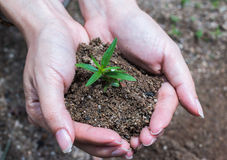 Hands holding young plant with soil Royalty Free Stock Images