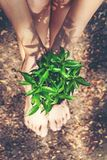 Hands holding young plants on the arid soil and cracked ground or dead soil in the nature park of growth of plant for reduce glo stock image