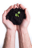 Hands holds topsoil with plant. Man's hands holds topsoil with bod on white background Royalty Free Stock Images