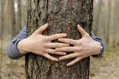 Hands hug a tree Royalty Free Stock Photo
