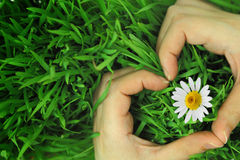 Hands hugging grass in shape of heart Royalty Free Stock Photo