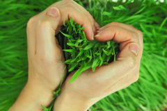 Hands hugging grass in shape of heart Stock Photo