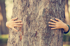 Hands hugging tree Royalty Free Stock Photography