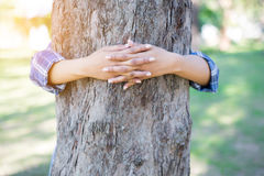Hands hugging tree Stock Photography