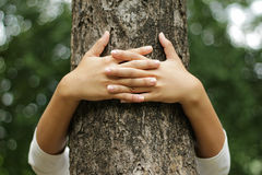Hands hugging a trunk of a tree Royalty Free Stock Photography