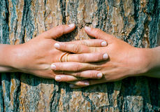 Hands hugging a trunk of a tree in summer park Royalty Free Stock Photos